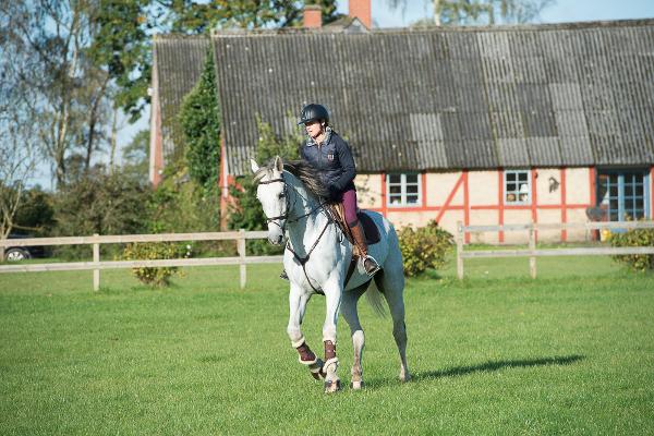 Våra hästar Sjöbo